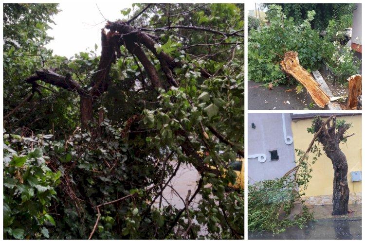 Copaci puși la pământ de vânt la Constanța. Primăria Constanța acționează pentru remedierea tuturor problemelor apărute