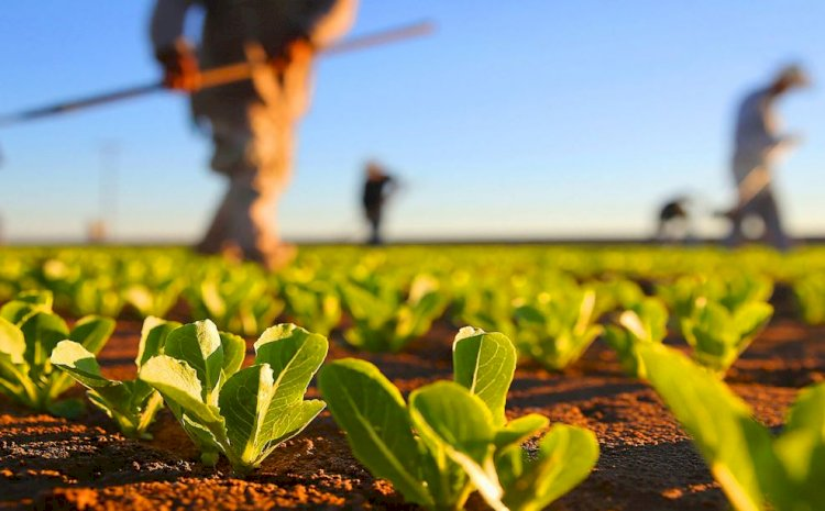 Tinerii fermieri pot obţine, prin concesiune, 50 de hectare de teren de la stat