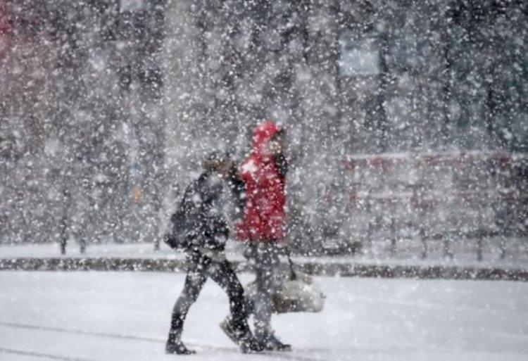 Cod galben de ninsori în Dobrogea și în sudul Munteniei