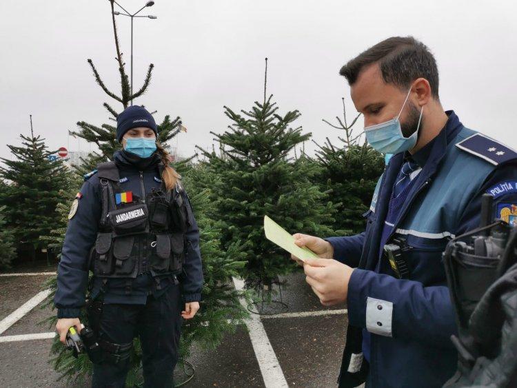Controale ale polițiștilor constănțeni la comercianții de brazi de Crăciun