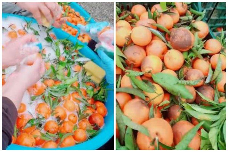 Români angajaţi în Italia să spele mandarine cu şampon de vase: Ia uitați ce cumpărăm noi din piață
