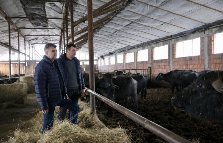 Ciolacu: Unii oameni care muncesc din greu, trebuie să beneficieze de sprijinul statului român, nu de bețe-n roate!